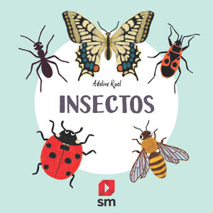 INSECTOS -NATURALEZA