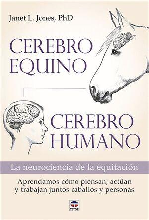 CEREBRO EQUINO / CEREBRO HUMANO