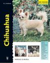 CHIHUAHUA -SERIE EXCELLENCE