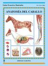 ANATOMIA DEL CABALLO -GUIAS ECUESTRES ILUSTRADAS